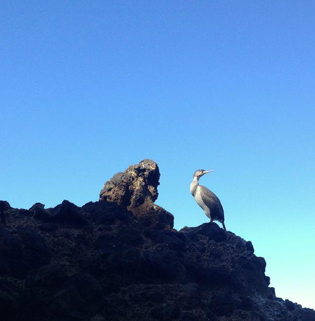 Birdlife Otago