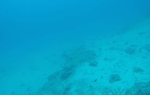 A reef shark I saw while diving at Paradise Cove, the Yasawa Islands, Fiji