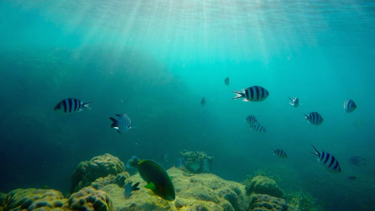 Underwater scene of fish and coral in Australia