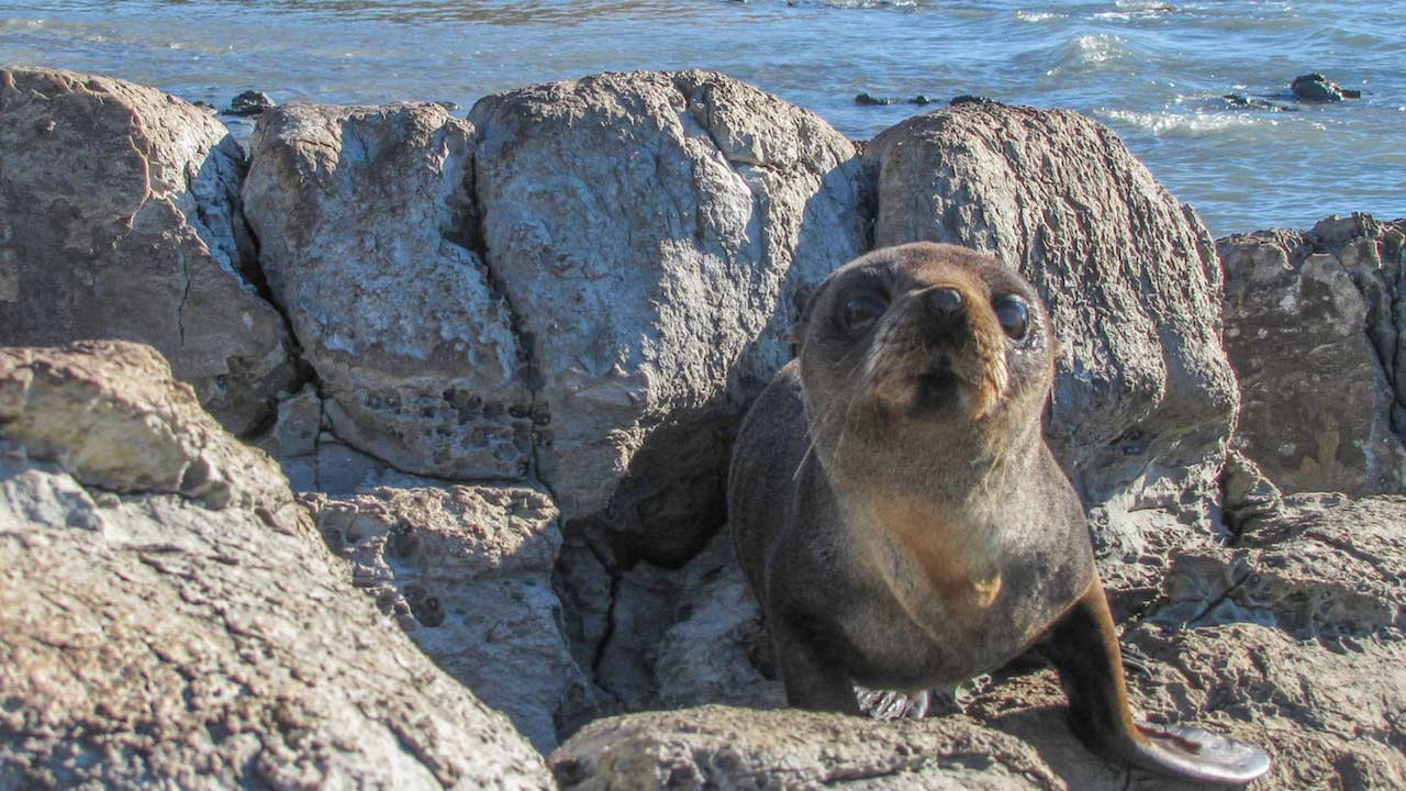 A close up of a seal sitting on a rock near water