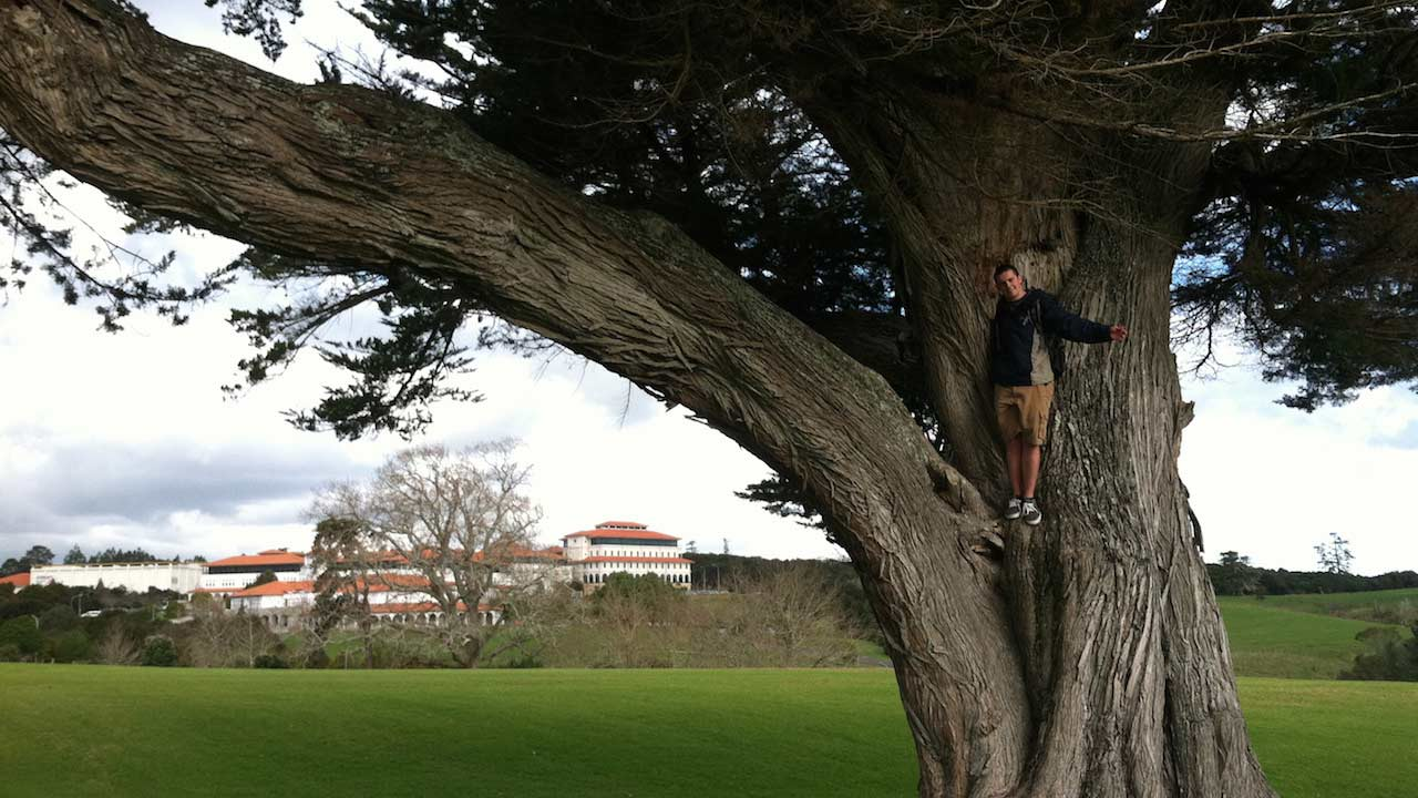 A man stands on a perch in a massive tree in Palmerston North, New Zealand