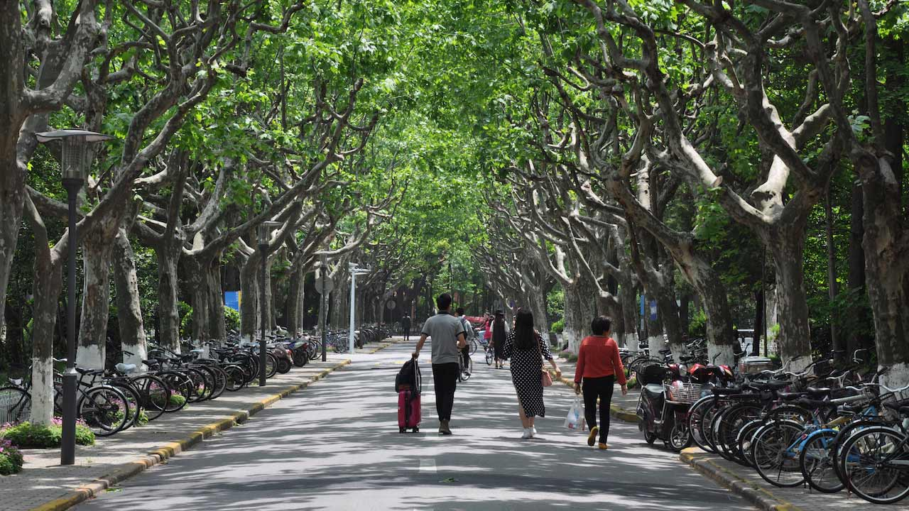 A family walks down a tree lined path in Shanghai