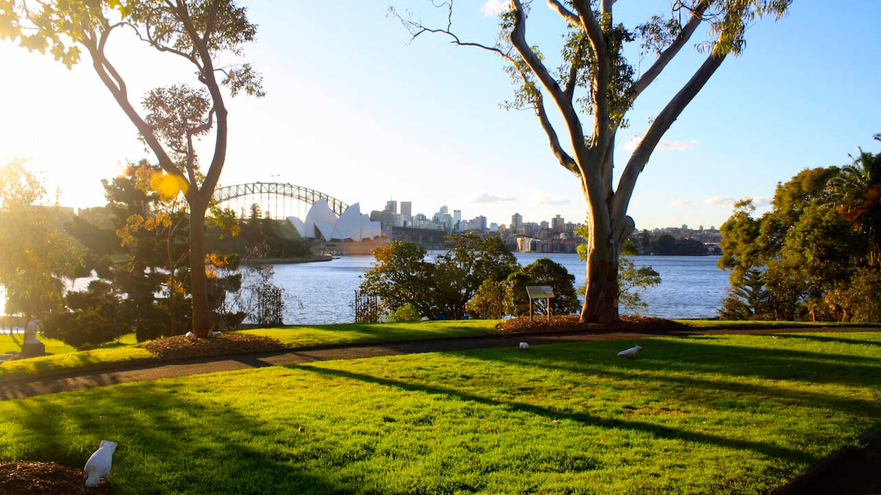Sun casts shadows amongst the trees on a grassy hill along the Sydney Harbour