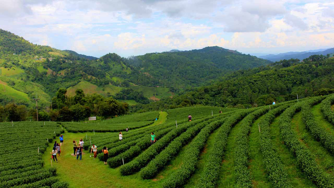 Lush rolling mountains and tea plantations in northern Thailand