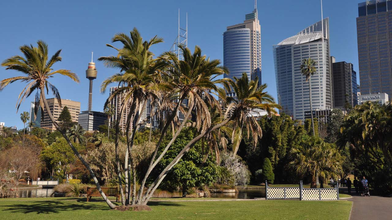 A bushel of palm trees growing on a grassy patch in front of Sydney's business district