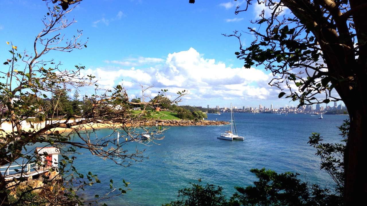 A boat sails on the Sydney Harbour framed by branches and trees