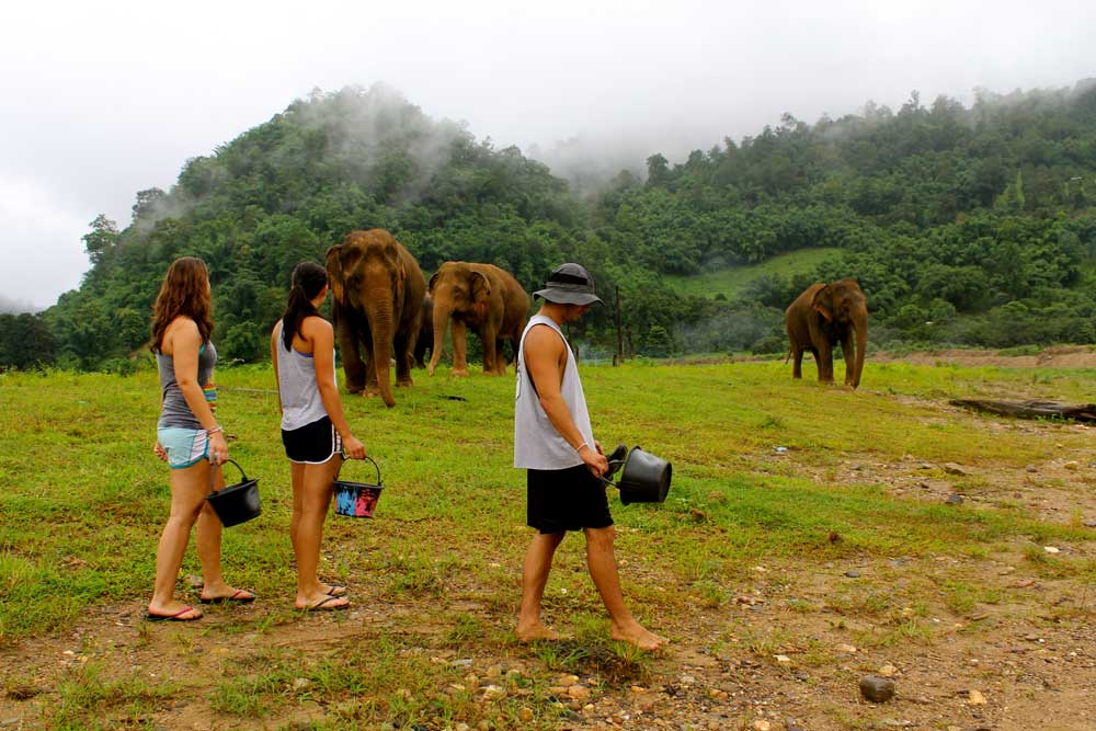 Volunteer in Thailand at the Elephant Nature Park