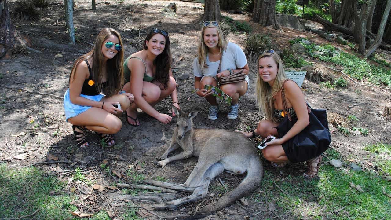 Four female students pose with a laying kangaroo at Currumbin Wildlife Sanctuary in Australia