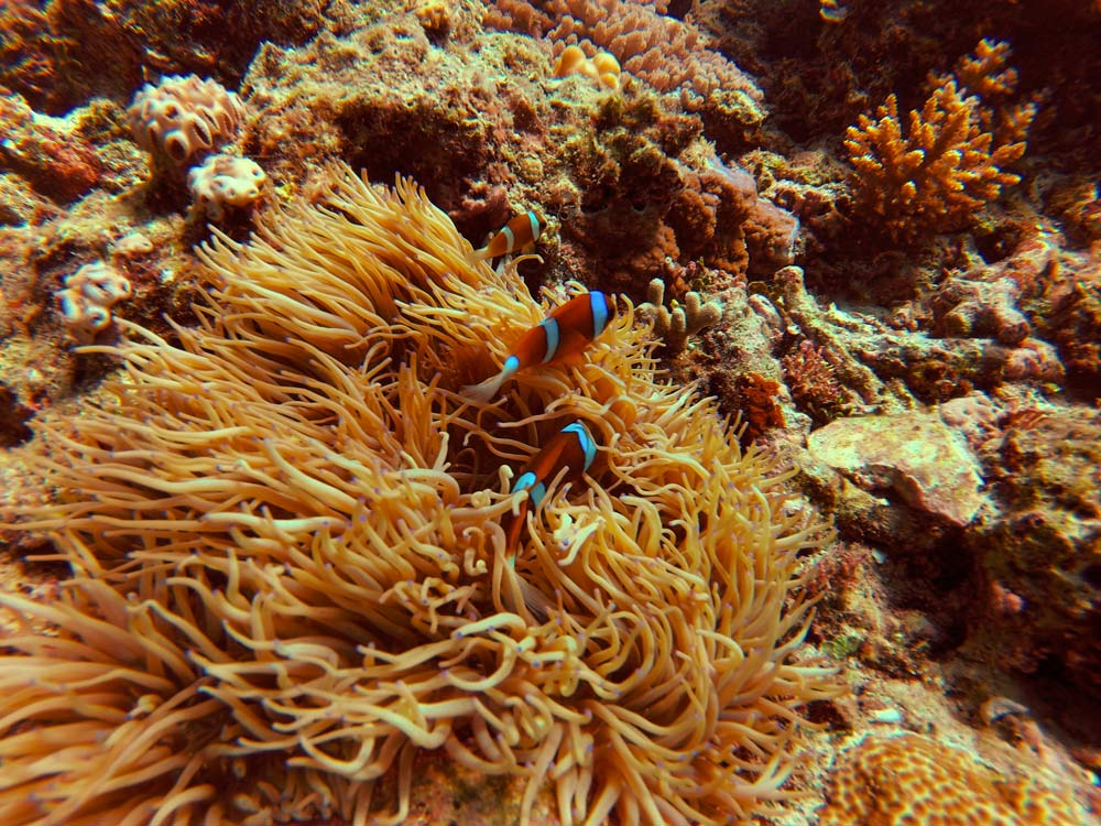 Marine life in Australia - Great Barrier Reef